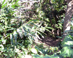 황금 숲 공원 밥 인상의 길